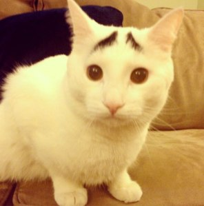 hsotdsambrows